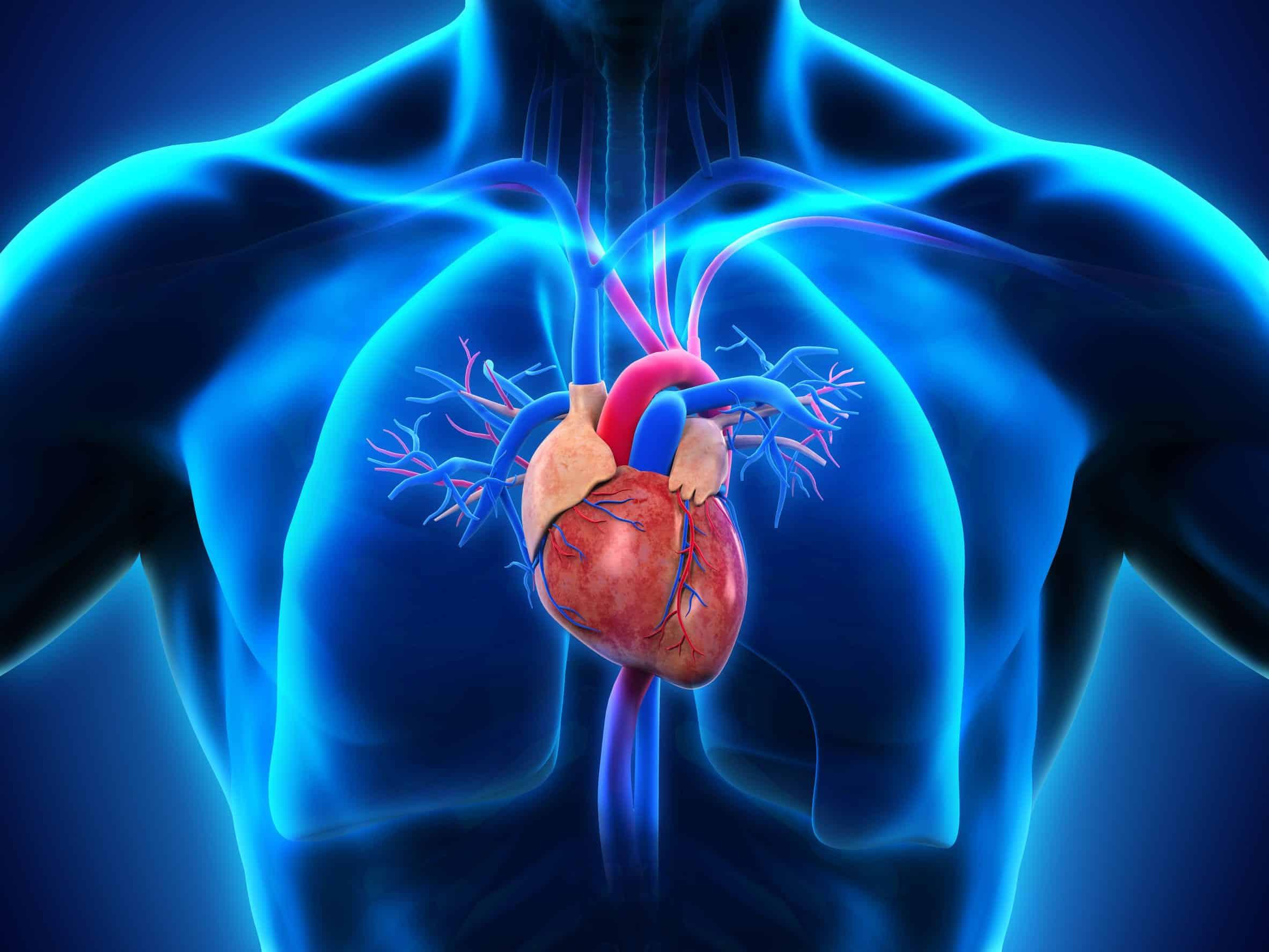 Medium-Chain Triglycerides | LCR Health