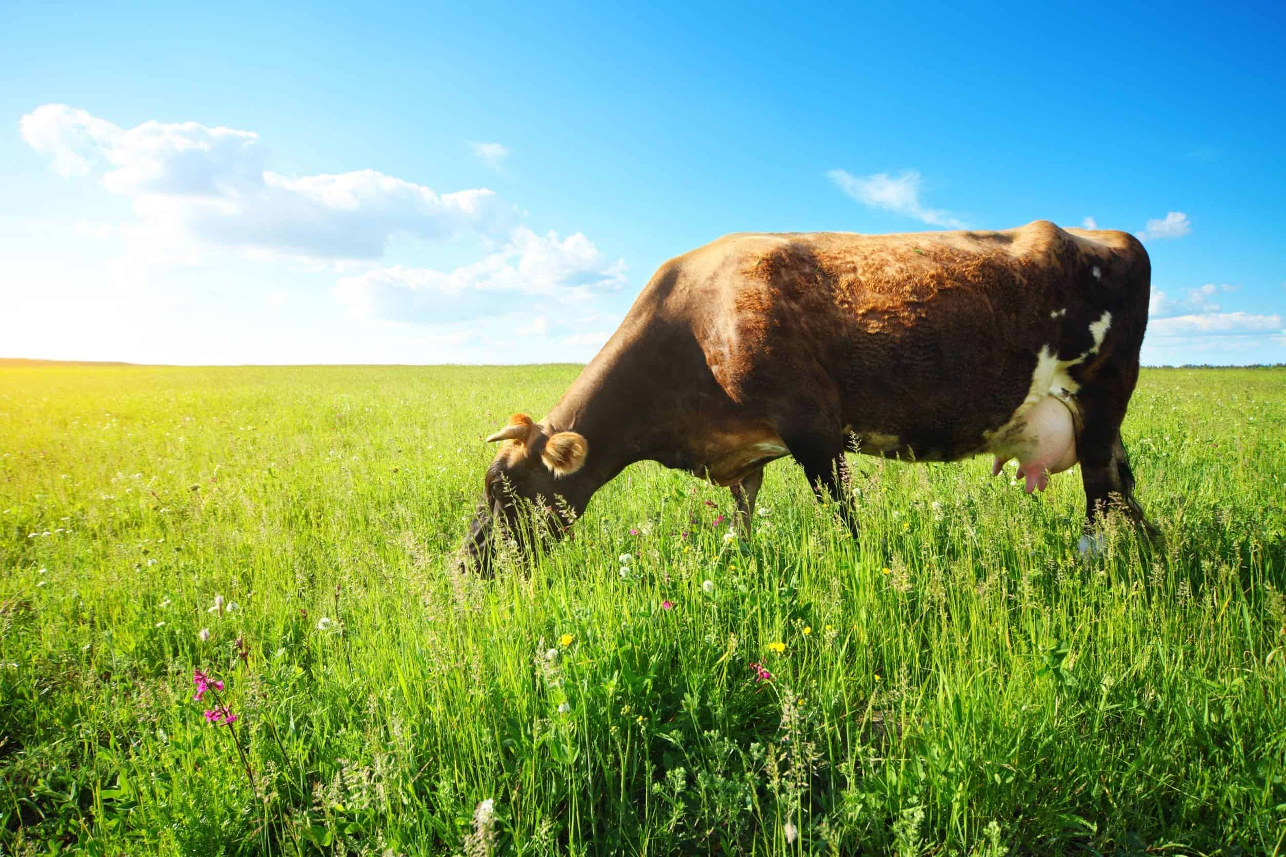 What Is Grass-Fed Butter? (and is it better for you?)