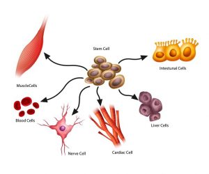 stem cell treatment | LCR Health