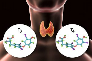 types of hormones   LCR Health