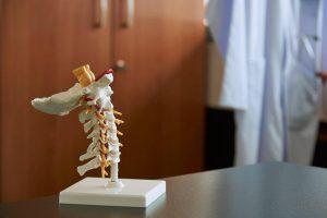 model of cervical spine | LCR Health