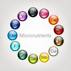 micronutrients | LCR Health